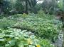 Organic Gardens | Tropic Greenery Landscaping