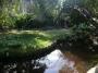 Oriental Garden | Tropic Greenery Landscaping